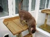 Martlets Cattery Inside Pen Cat jumping down from scratching post